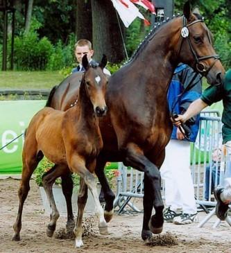 pferd hinterhand kreuzen