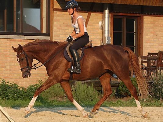 pferd tickt vorne rechts