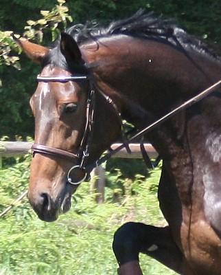 großes pferd zum draufsitzen